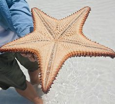 Starfish are just the start of your adventure in the Bahamas!