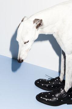 Prestage Cara schoenen