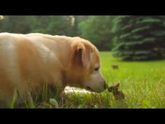 Watch a dog and a wild baby bunny become fast friends | MNN - Mother Nature Network
