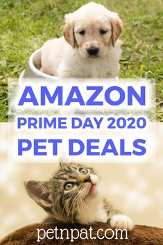 Amazon Prime Day 2020 Pet Deals: Dogs, Cats, Reptiles, Aquatics,