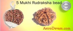5 Mukhi Rudraksha bead is very common and powerful divine bead. It contributes greatly in attaining success in all avenues of life and gaining knowledge, intelligence, wealth, power, fame and other goals of life. Call:- +91-9650511113