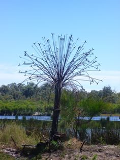 Art-Tap Tree- by the Lake, Yanchep, WA