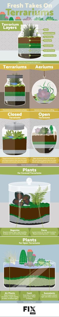 Making a micro-ecosystem to set anywhere in your home is easy!: