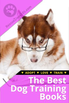 Best Dog Training Books for Your Rescue Dog - Best Dog Training Books: I've researched and read so many different dog training books, and I kno - Best Dog Training Books, Dog Training Courses, Puppy Training Tips, Training Your Dog, Brain Training, Dog Breeds Little, Best Dog Breeds, Best Dog Toys, Best Dogs