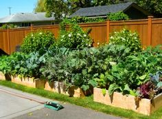 Gardeners can build a raised garden beds with relative ease. Here are tips on planning, building, protecting and irrigating raised garden beds. Small Garden Bed Ideas, Elevated Garden Beds, Raised Bed Garden Design, Raised Patio, Garden Design Plans, Raised Beds, Small Front Gardens, Small Backyard Gardens, Garden Spaces