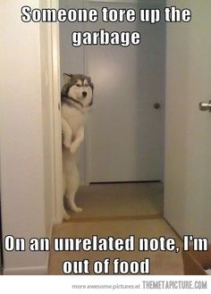 Dogs are the best kind of people! Check out these 24 funny dog memes that will ALWAYS make us laugh, no matter what. Cute Funny Animals, Funny Animal Pictures, Funny Cute, Dog Pictures, Funny Dogs, Funny Husky, Husky Dog, Hilarious Pictures, Funny Photos
