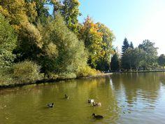 JKU im Herbst Johannes Kepler, Austria, University, Country Roads, River, Places, Outdoor, Linz, Autumn