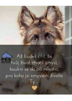 Cute Dogs, Quotations, Pitbulls, Death, Motivation, Animals, Quote, Quotes, Creative