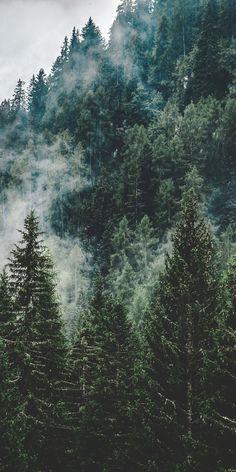 Mist, green trees, nature, Italy, 1080x2160 wallpaper