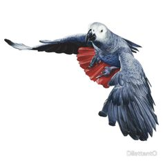 AFRICAN GREY PARROT (FLYING) #2 by DilettantO