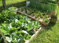 vegetable garden - Google Search