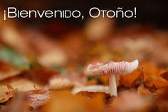 ¡Bienvenido, #otoño!