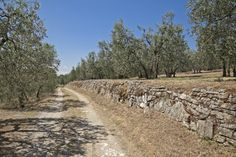This is what you may find by buying a property in #Tuscany