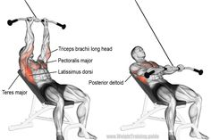 Target your latissimus dorsi with the incline straight-arm pull-down! Your pecs, posterior delts, triceps, and various back muscles act as synergists. Best Chest Workout, Chest Workouts, Gym Workouts, Body Fitness, Physical Fitness, Fitness Tips, Workout Fitness, Good Back Workouts, Back Exercises