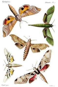 (via Pin by Isabel Marin on Insectos | Pinterest)