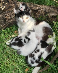 Precious Kitty Family