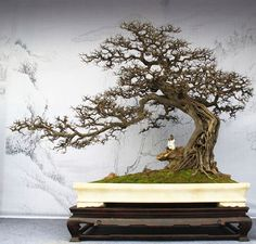 """Even today there is a line of Chinese bonsai called """"Penjing"""", which follows different patterns and aesthetics of Japanese models. Description from pinterest.com. I searched for this on bing.com/images"""