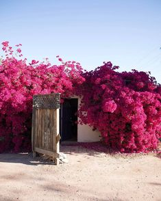 You can enjoy your garden all year round when you learn how to create an indoor flower garden. Flowers are … Bougainvillea, Beautiful Flowers, Beautiful Places, Illustration Blume, Landscape Illustration, Climbing Vines, Flower Aesthetic, Pink Aesthetic, Flower Pictures