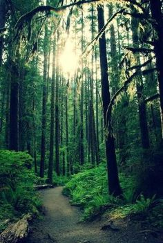 Olympic National Park, Washington by Eva0707
