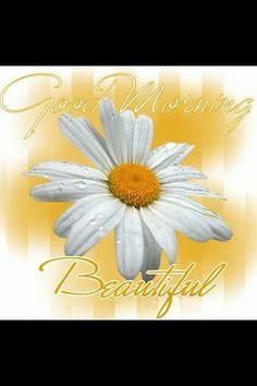 Description : Send The Free HD Good morning Beautiful Whatsapp