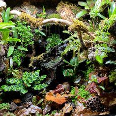 Terrarium Tank, Gecko Terrarium, Reptile Terrarium, Terrarium Plants, Leopard Gecko Habitat, Gecko Vivarium, Frog Habitat, Frog Tank, Chameleon Pet