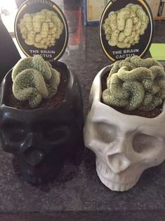 59 Ideas For Succulent Cactus Fun Witch Decor, Gothic House, Cactus Y Suculentas, Cacti And Succulents, Indoor Plants, Indoor Flowers, Indoor Gardening, Hanging Plants, House Plants