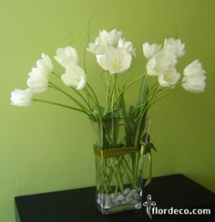 tulipanes blancos - white tulips