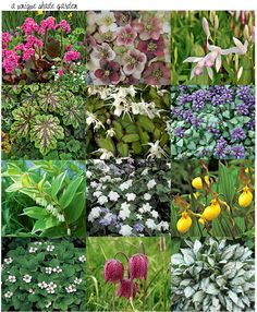 unique plants for a shade garden from left to right: 1. bergenia 2. hellebore 3. chinese ground orchid 4. heuchera 5. epimedium 6. dead nettle 7. solomon's seal 8. trillium 9. lady's slipper 10. bunchberry 11. checkered lily 12. pulmonaria
