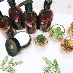 We only use the best ingredients, we don't settle. #luseta #lusetabeauty #lusetalifestyle . . . #haircare #hairproducts #hair #naturalingredients #healthyliving #teatree #arganoil #macadamiaoil #coconutmilk #hairtreatment #shampoo #conditioner #cactus  #Regram via @lusetabeauty