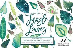 This listing includes hand painted watercolor jungle leaf illustrations that are 300 dpi. 30 TIFF files with transparent background. 1 PSD layered file with all elements. 3 EPS seamless