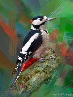 FINE ART PRINTS - Great spotted woodpecker - Bird photos to BIRD ART Abstract Photos, Abstract Canvas, Wall Art Prints, Fine Art Prints, Photo To Art, Art Prints Online, Bird Artwork, Art Birthday, Creative Art