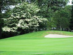 Dogwood on the golf course