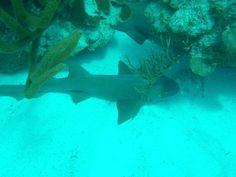 el Caribe, su fondo marino