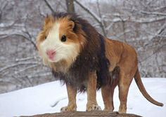 These 30 Animal Hybrids Will Blow Your Mind. Except #6... I Just Want To Hug That Thing.