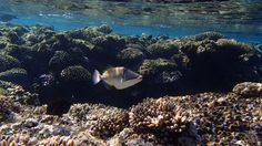 Sharm El Sheikh, Olympus, Picasso, Top, Outdoor, Pisces, World, Pictures, Outdoors