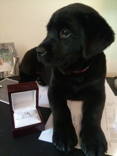 a puppy AND a ring?! yes please!