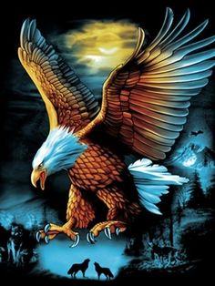 Eagle Wallpaper, Lion Wallpaper, Animal Wallpaper, Eagle Images, Eagle Pictures, Nature Pictures, American Indian Art, Native American Art, American Flag