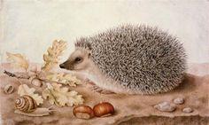 Интересное и забытое - быт и курьезы прошлых эпох. - Giovanna Garzoni (1600–1670) great art website http://www.artcyclopedia.com/artists/garzoni_giovanna.html