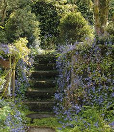 Campanula porscharskyana draped around a staircase.to die for! aesthetic Journal - Garden Design, Montreal, Perennial Flower G Montreal, The Secret Garden, Secret Gardens, Design Jardin, Different Aesthetics, Walled Garden, Nature Aesthetic, Aesthetic Plants, Spring Aesthetic