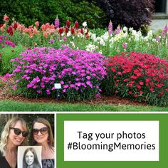 Rachel Davidson, for sharing her photo, celebrating the life of her mother at her favorite place in the Dallas Arboretum garden, #BloomingMemories, Dallas Arboretum, Arboretum, Garden, Family Activities, Family Memories, Memories