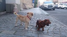 Mis perros en mi calle