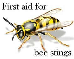 Bee and wasp stings are a common summer hazard. Learn how to treat a sting and what complications to look for. http://frugalnurse.com/2013/07/first-aid-bee-stings/