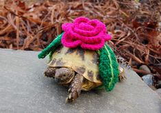 flower TURTLE COZY LOL