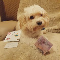 My grandma sends my dog cards and pocket money for treats. http://ift.tt/2q8EpGM