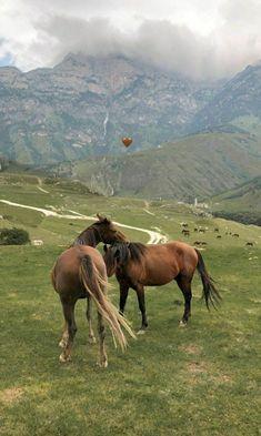 Cute Horses, Pretty Horses, Horse Love, Beautiful Horses, Animals And Pets, Baby Animals, Cute Animals, Cavalo Wallpaper, Applis Photo