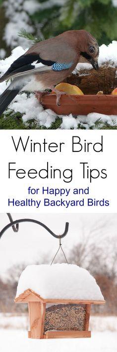 Winter Bird Feeder Tips for Happy and Healthy Backyard Birds