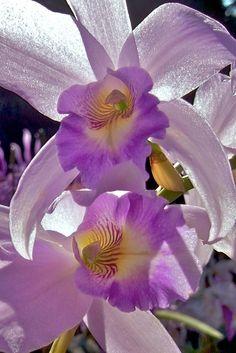 Orchid by shinichiro saka via Flickr.com