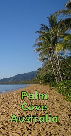 Check out the best Palm Cove Resorts and end up in a beautiful spot for an awesome vacation. Here are the top resorts in Palm Cove, Queensland. Beach Resorts, Luxury Resorts, Best Hotels, Amazing Hotels, Hotel Hacks, Australia Holidays, Inclusive Holidays, 5 Star Resorts, Family Getaways