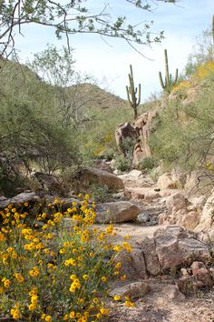 Hiking paradise, McDowell Sonoran Preserve in Scottsdale, Arizona, USA. Amazing nature hikes with terrific views.  Congratulations to the citizens of Scottsdale for approving funding to purchase this amazing huge tract of land.