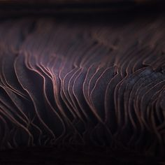 Mushroom gills with delicate layers & ripples - organic textures; natural pattern source